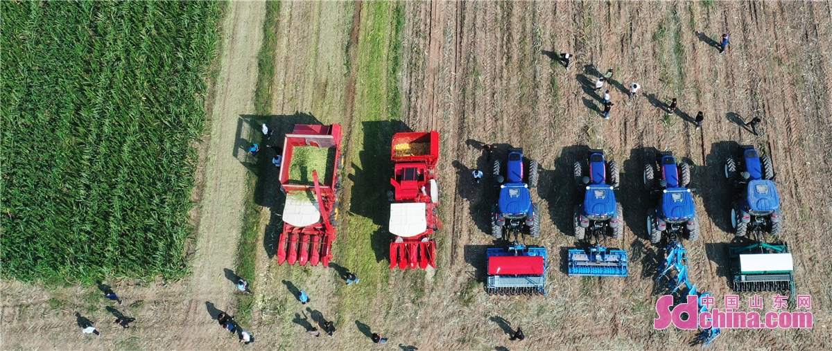 On Sept. 11, the operation display on the combination of smart farm machinery and digital agriculture was held in the corn standardized farmland in Luojia Village in Zouping, E China&rsquo;s Shandong Province. More than 200 operators of farm machinery attended the activity, which is committed to reducing grain loss and recycling agricultural and animal husbandry waste, promoting the automated, large-scale and standardized development of agricultural production, ensuring the harvest of autumn grain, and contributing to the revitalization of rural areas.<br/>