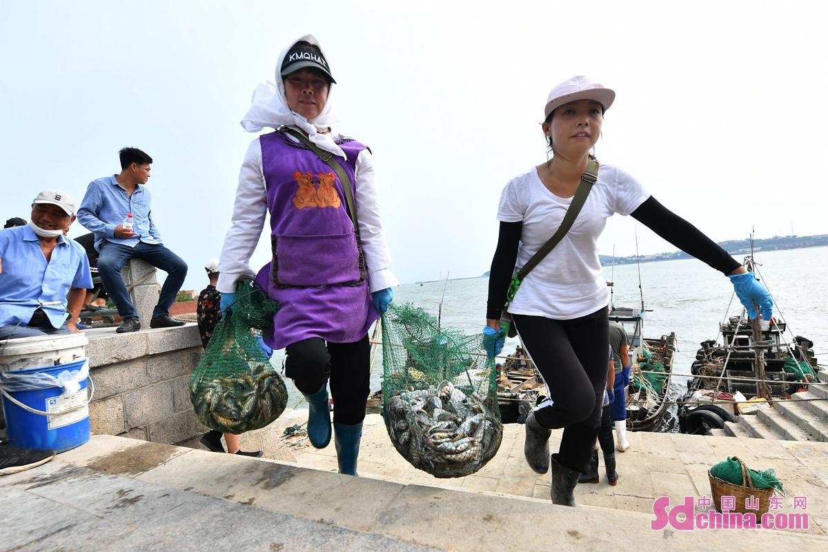 <br/>  渔民在青岛市崂山区沙子口码头运送秋捕的渔获<br/>