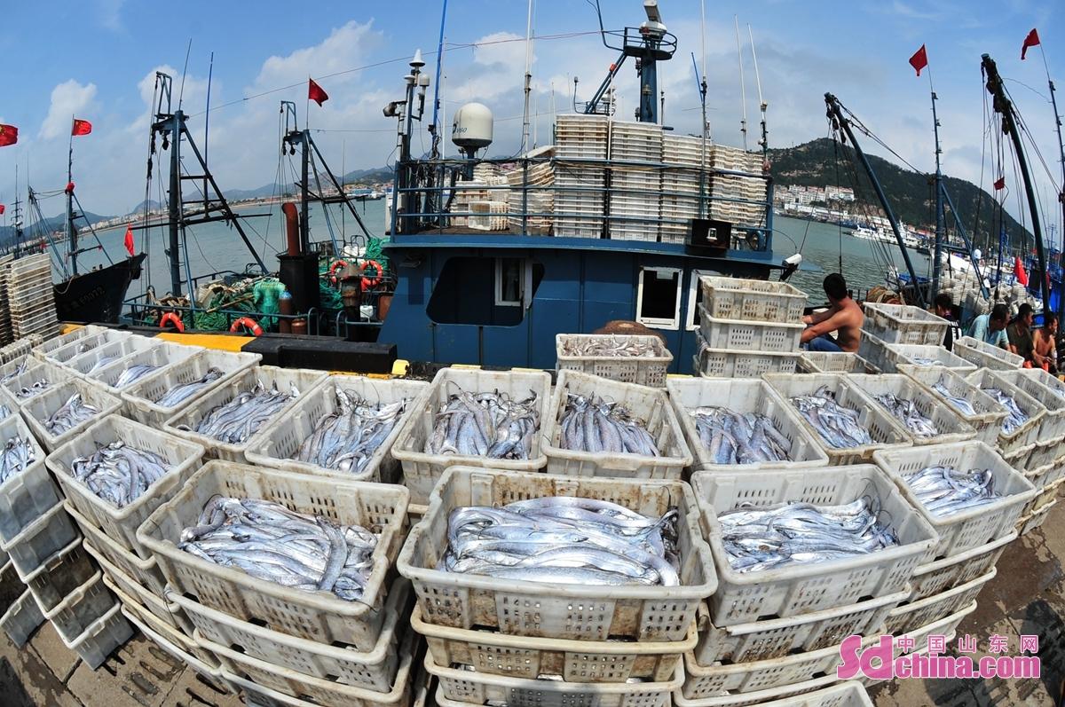 <br/>  开渔以来,位于青岛市崂山区中心渔港进入渔获转场旺季,渔运船只载回各种海鱼、虾蟹在码头上集中装入冷藏车供应各地市场,渔民喜获丰收。<br/>