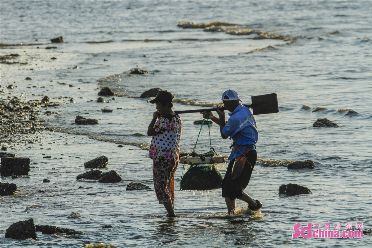 Locals dig clams at the ebb tide in Tangdao Bay in Qingdao City, E China&rsquo;s Shandong province, to enjoy the bounty of the sea.<br/>