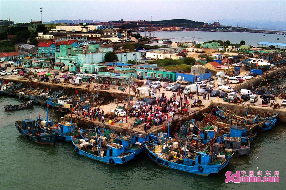 Residents in Hongdao fishing port in Chengyang District of Qingdao city, East China's Shandong Province, are busy buying the freshest seafood as the four-month summer fishing moratorium in the Yellow Sea and Bohai Sea ends on September 1, 2021.(Photo by Wang Haibin)