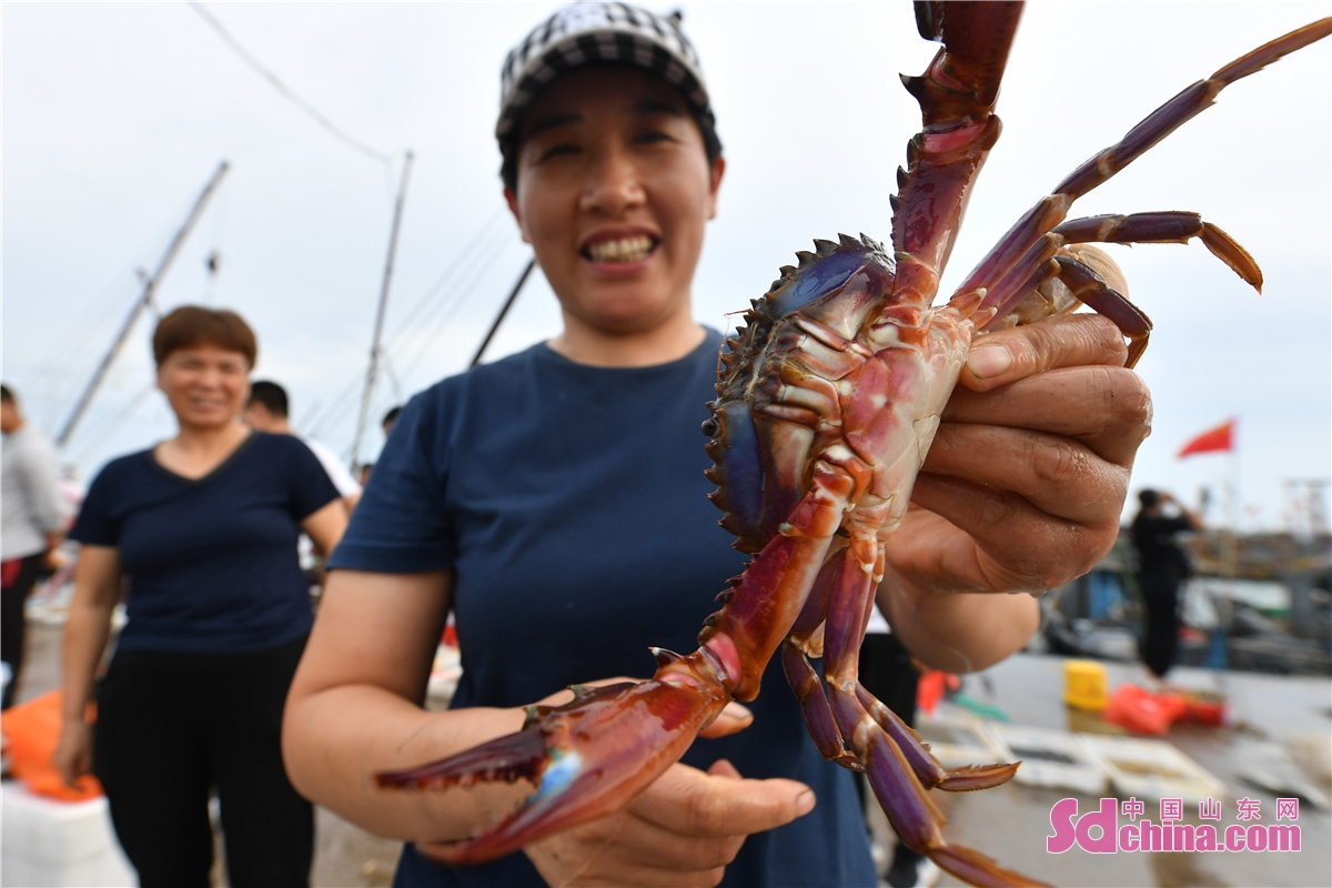 Residents in Hongdao fishing port in Chengyang District of Qingdao city, East China's Shandong Province, are busy buying the freshest seafood as the four-month summer fishing moratorium in the Yellow Sea and Bohai Sea ends on September 1, 2021. (Photo by Wang Haibin)<br/>