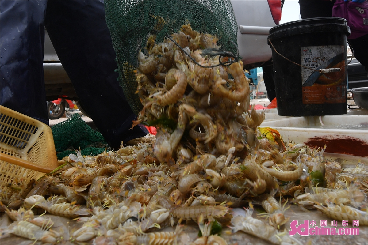 Residents in Hongdao fishing port in Chengyang District of Qingdao city, East China's Shandong Province, are busy buying the freshest seafood as the four-month summer fishing moratorium in the Yellow Sea and Bohai Sea ends on September 1, 2021.(Photo by Wang Haibin)<br/>