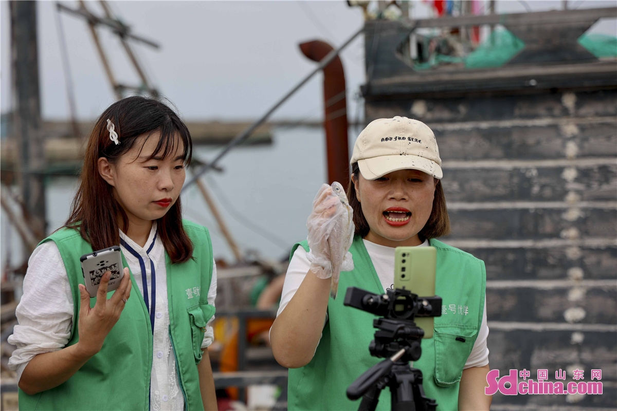 On the afternoon of September 1, 2021, fishermen at Xiyangjiawa fishing port in Langya Town, West Coast New Area of Qingdao, E China's Shandong province, harvested a large number of fat fish, crabs and seafood as the four-month summer fishing moratorium in the Yellow Sea and Bohai Sea ends on September 1, 2021. When the fish, crabs and seafood are brought back to the port, citizens and tourists flock to the port to buy them. (Photo by Han Jiajun)