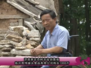 济南果农杏树丰收销售难  临沂爱心企业购买1000斤