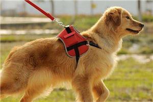 关注文明养犬·重庆 文明养犬 法律法规需完善