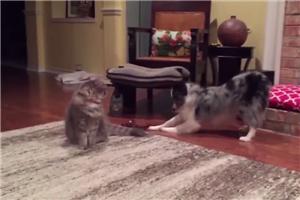 猫咪和��狗的爱恨情仇