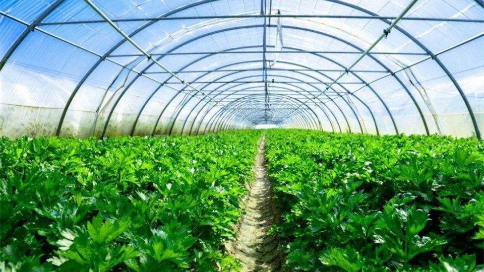 冬季保供应 蔬菜大棚变暖棚