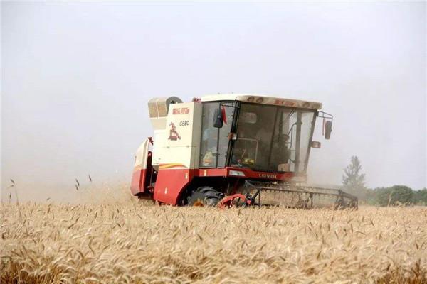 亩产855.2公斤!黄淮冬麦区亩产新纪录诞生