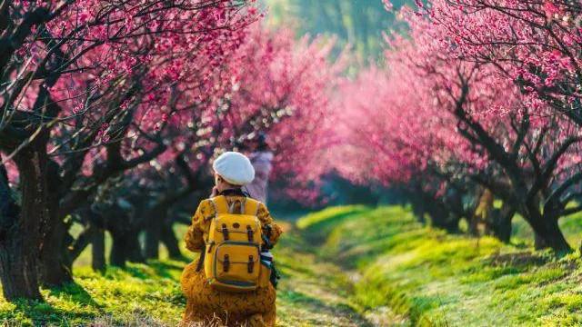 阳光明媚风拂面 春暖花开正当时
