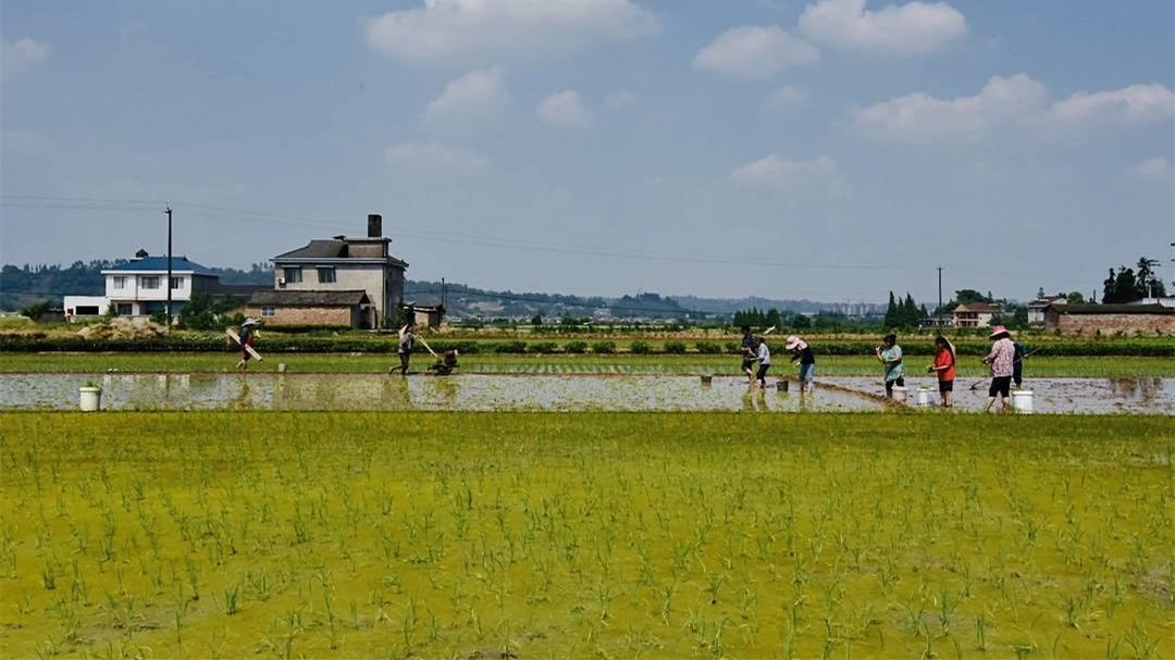 农业农村部 全国春播全面展开 进度近三成