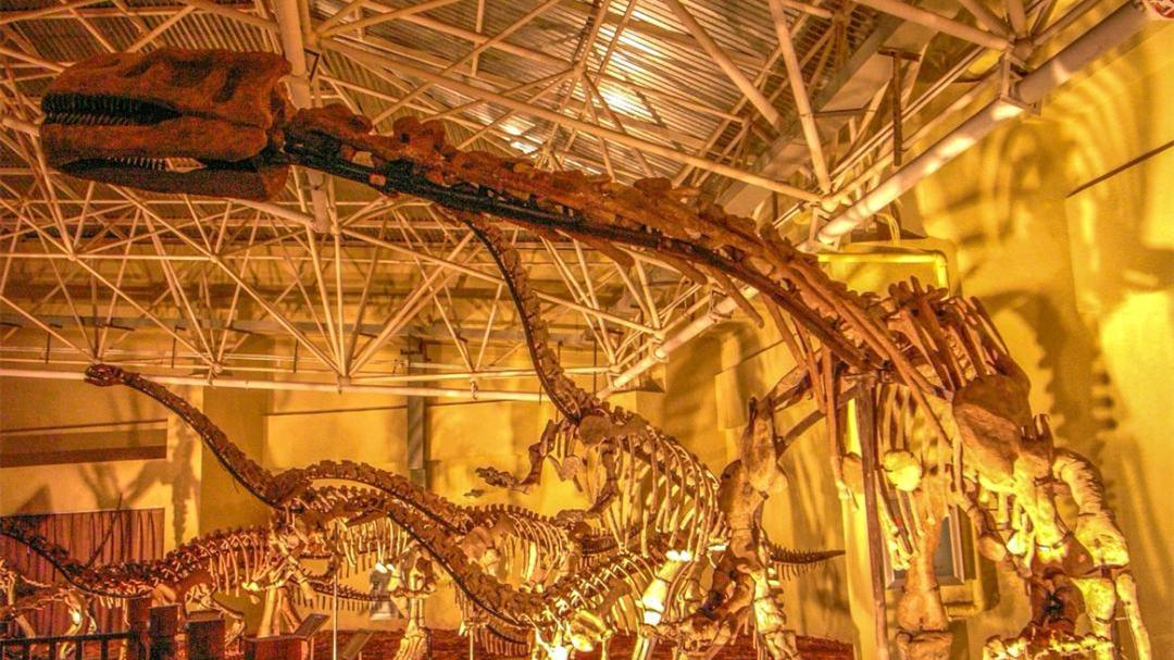 我国云南发现珍稀恐龙化石 不属任何已知属种