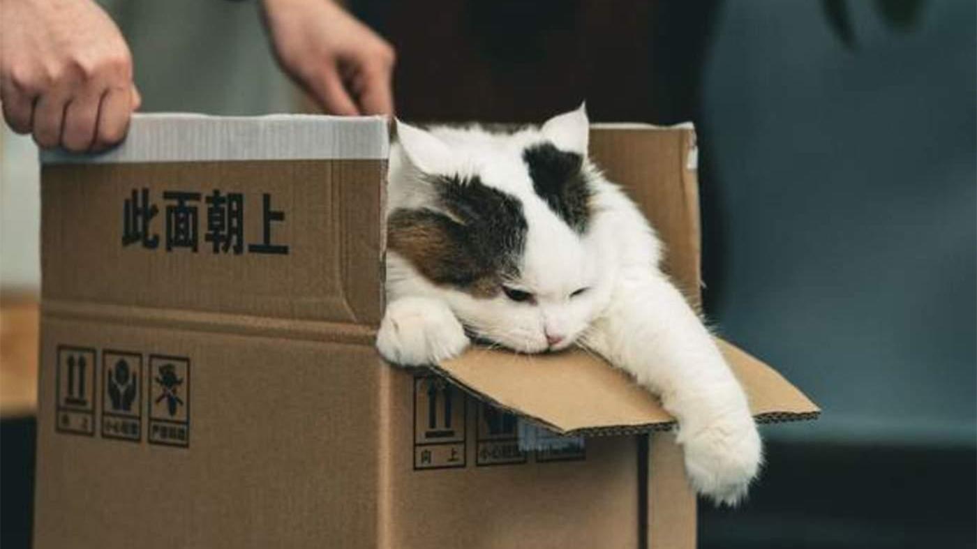 """一问到底 猫狗奄奄一息 """"宠物盲盒""""谁之过?"""