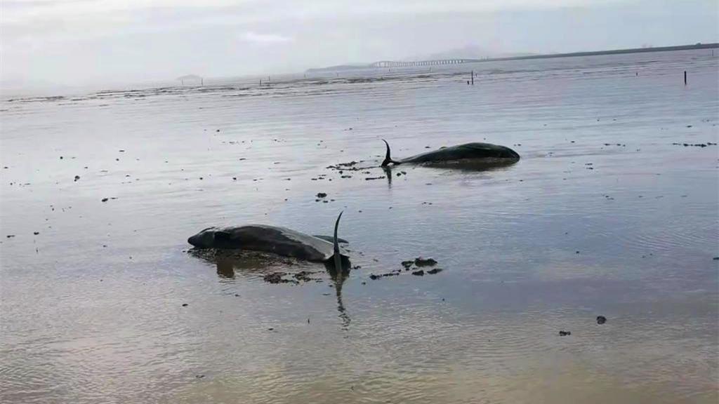 海豚搁浅澄迈海边 海岸警察联合多部门合力救助