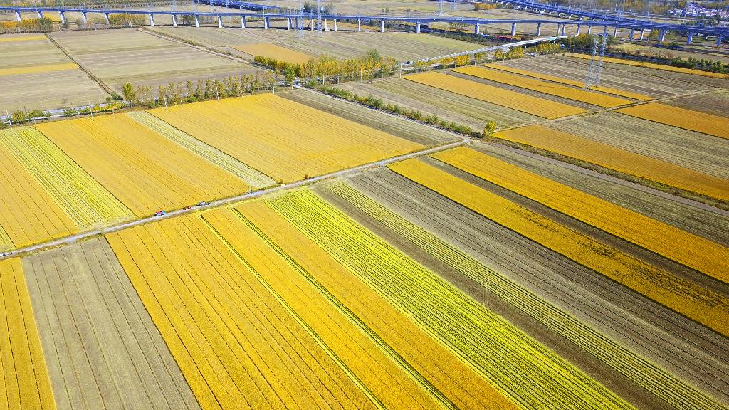 农业农村部 全国秋粮收获过两成 进度与上年相当