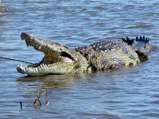 十大最危险海洋动物:水母问鼎海蛇上榜(二)