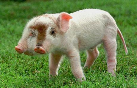 英媒体盘点10大奇异动物 动物世界里的怪胎
