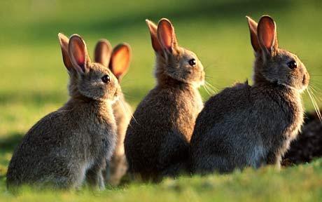 可爱的小兔子.