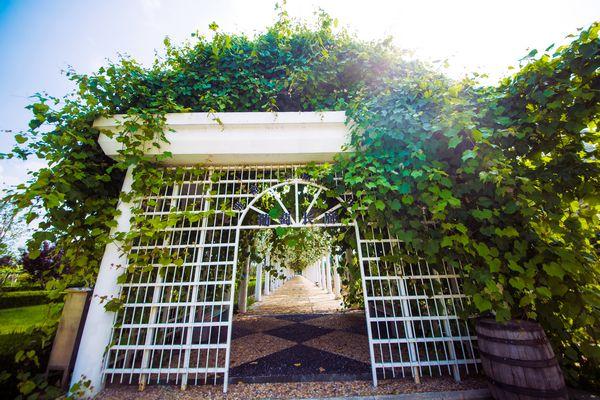张裕卡斯特酒庄鲜食葡萄长廊挂满了诱人的葡萄