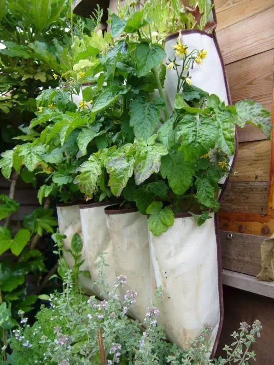 一个人在家可以DIY什么 利用废旧品打造创意小花园