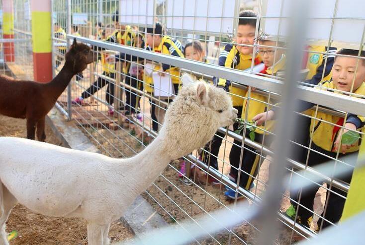 青岛一学校将动物园搬进校园 引进30余种动物