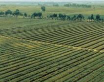 我国进一步明确耕地占补平衡的严格机制