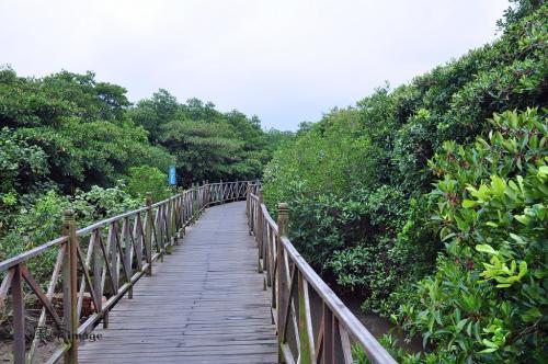 文昌清澜红树林保护区要退塘还林还湿啦
