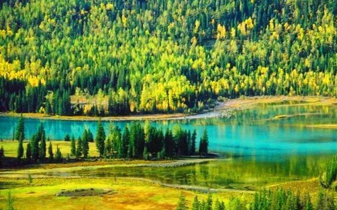 北疆风景美 草原花正开