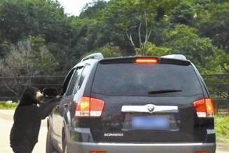 游客在八达岭动物园猛兽区开窗遭熊袭 园方称将调查