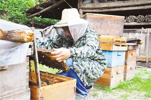 【砥砺奋进的5年】昔日养蜂亏损户 如今致富带头人