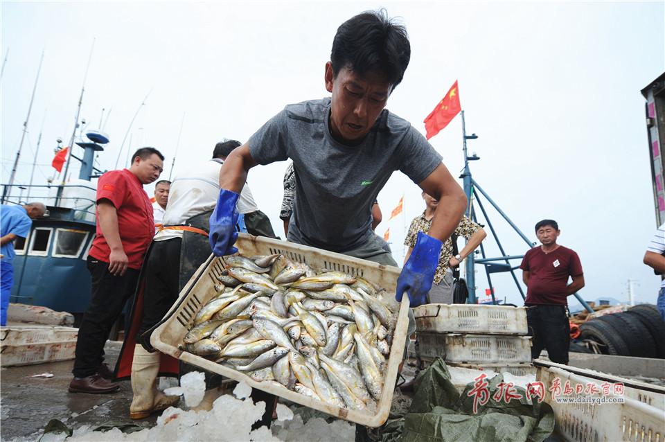 青岛市中心渔港,忙碌的渔港工人在装运新鲜渔获。<br/>