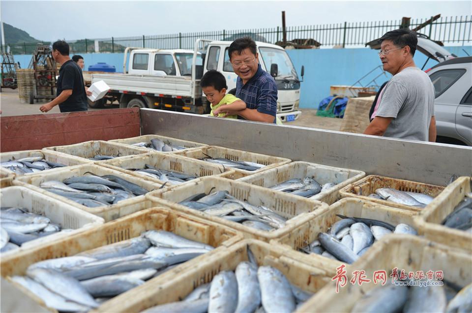 市民在青岛市中心渔港观看装运整车的黄金鲅。<br/>
