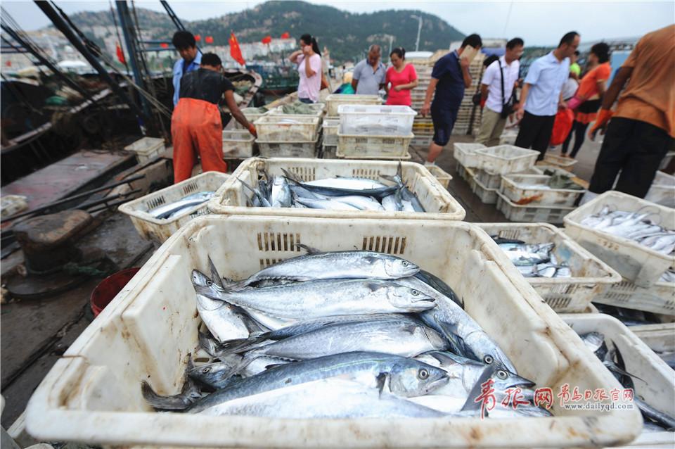 青岛市中心渔港刚刚卸下各类海鱼,市民自己动手扫货。<br/>