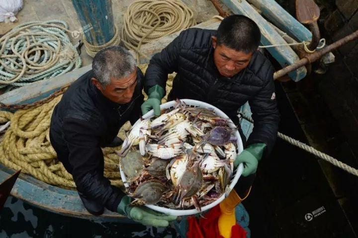 青岛当季海货跌成白菜价螃蟹10元/斤上岸抢光