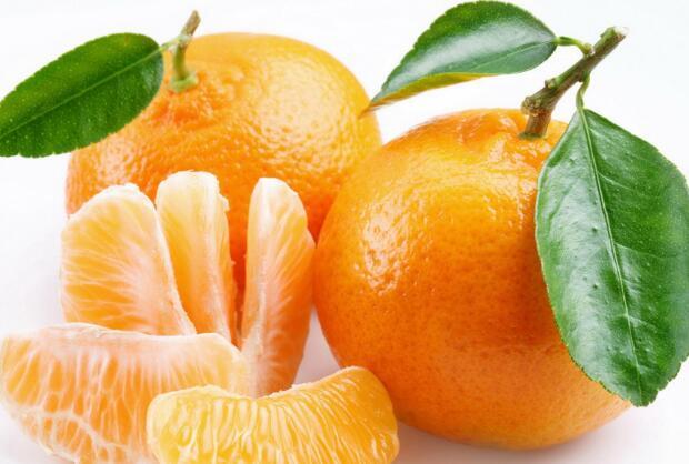 一棵柑橘树 全身都是宝