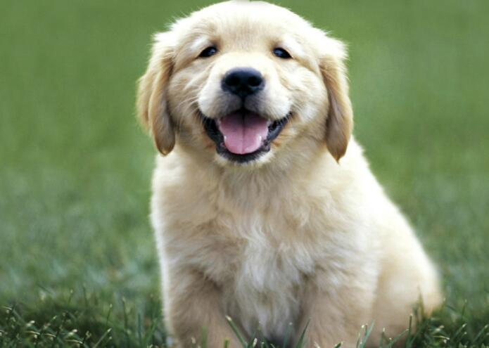 研究:养狗有助降低提前死亡风险 延长寿命