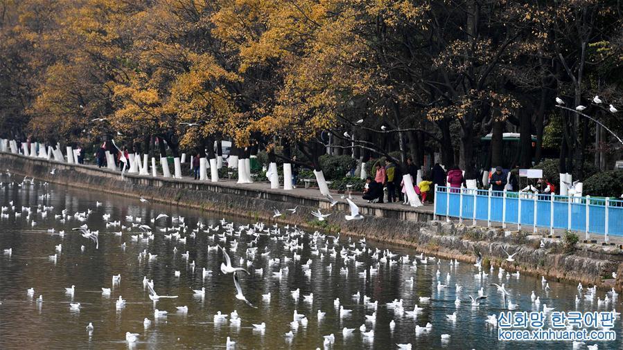 새해 도심 공원서 갈매기 구경<br/>