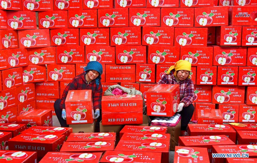 Farmers of a fruit cooperative package apples that are ready to be exported in Zhongzhuang Town of Yiyuan County, east China's Shandong Province, Jan. 4, 2018. More than a thousand tonnes of apples were ready to be exported to Thailand, Indonesia and other countries. (Xinhua/Zhao Dongshan)<br/>