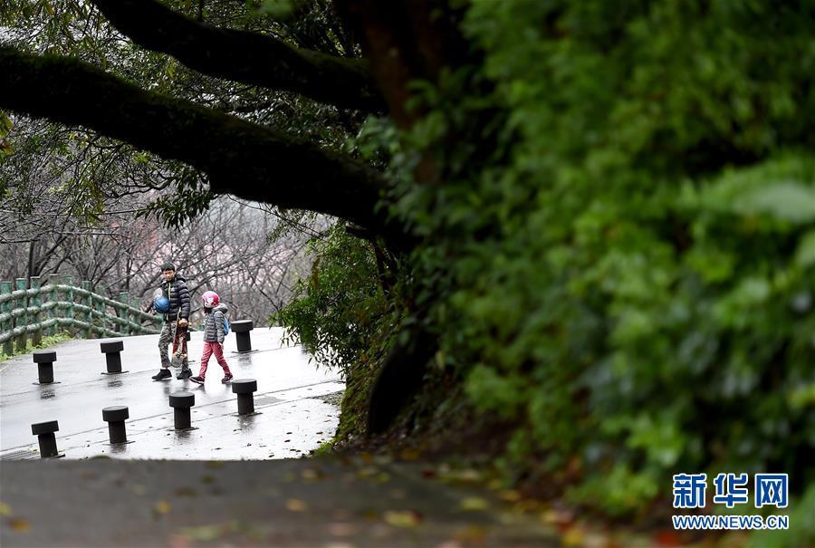 1月6日,两名游客在台北阳明山游玩。连日来台北持续降雨,雨中的阳明山别有一番景致。<br/>