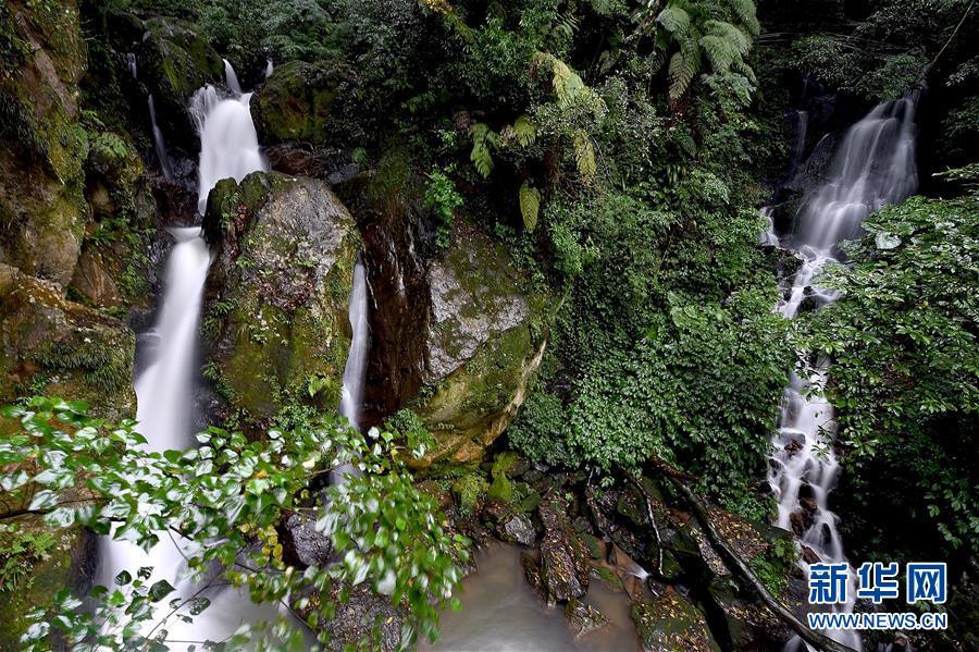 <br/>   台北阳明山中的一处瀑布(1月6日摄)。<br/>