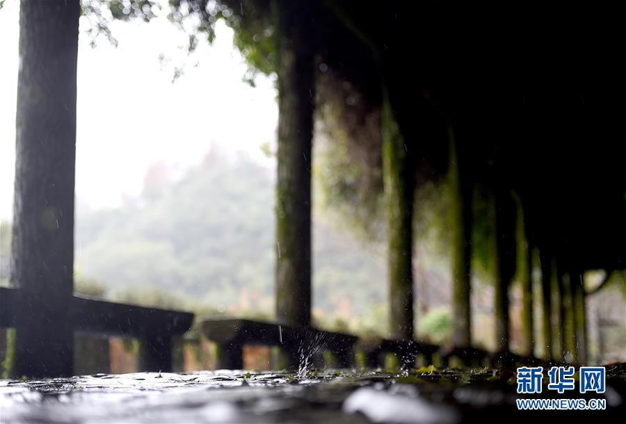<br/>   连日来台北持续降雨,雨中的阳明山别有一番景致。