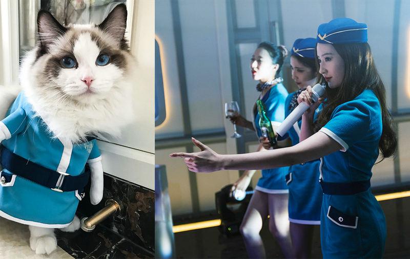 映画「二代妖精」出演中の劉亦菲、自身の愛ネコも同じ衣装にコスプレ
