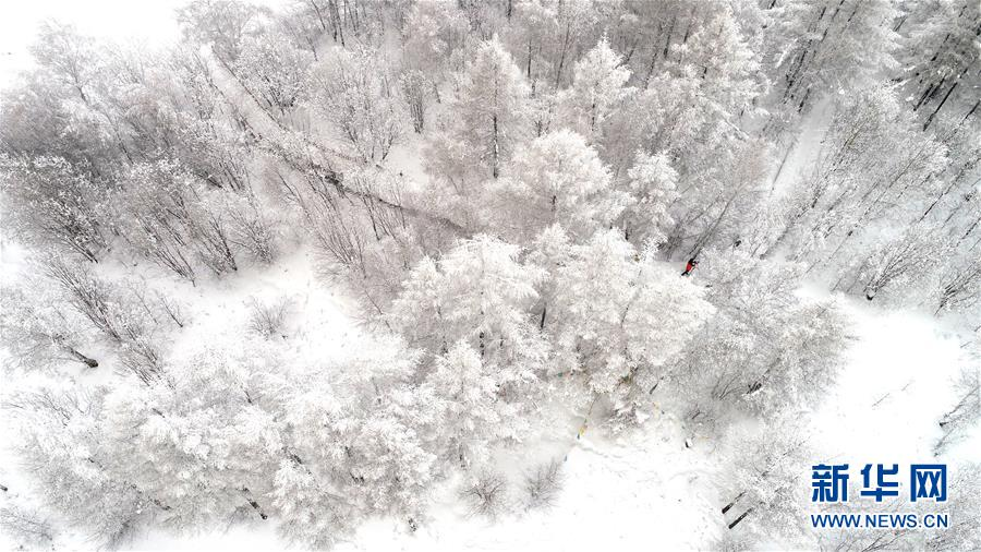 近日,内蒙古自治区阿尔山市白狼岗景区银装素裹,晶莹剔透的雾凇吸引了不少游客前来观光游览。<br/>