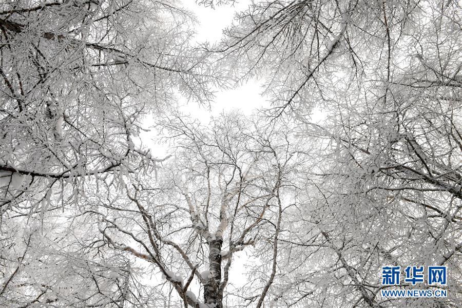 <br/>   阿尔山市白狼岗雾凇景观(1月9日摄)。
