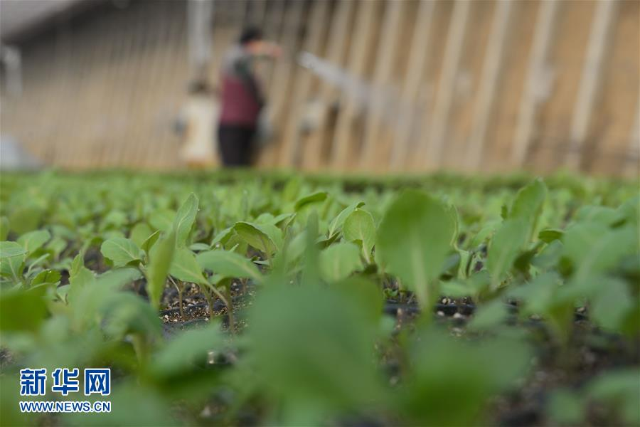 <br/>  1月20日是大寒节气,各地农民劳作在田间地头进行冬季农作物管理。<br/>