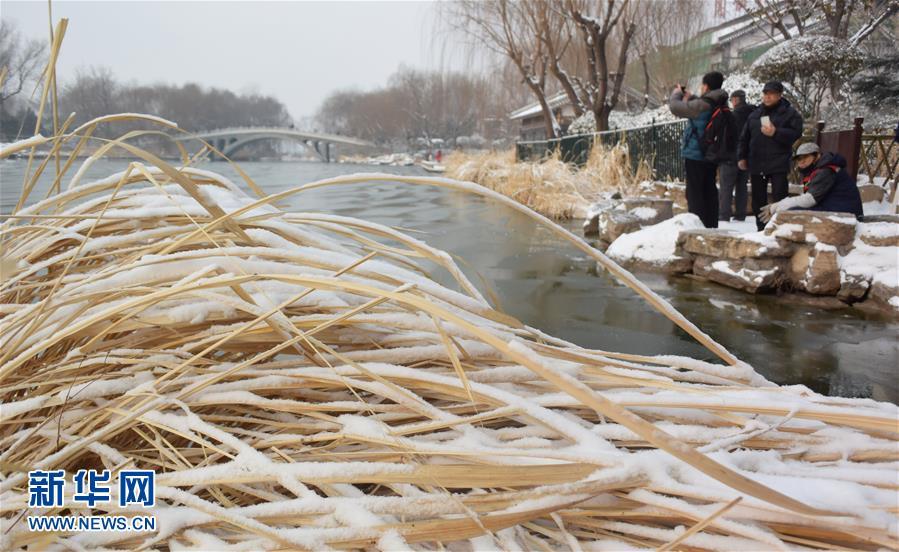 1月28日,市民和游客来到雪后的济南大明湖观赏美景。<br/>
