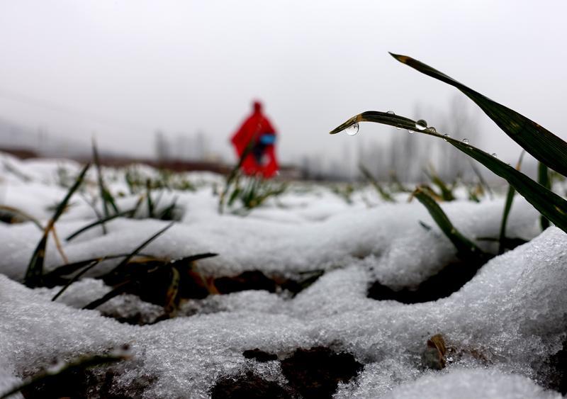 枣庄市山亭区春雪。<br/>