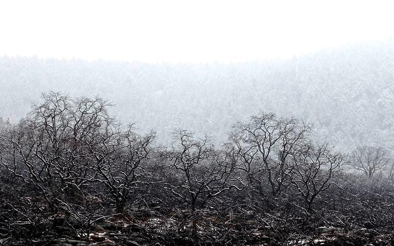 枣庄市山亭区雪景。<br/>