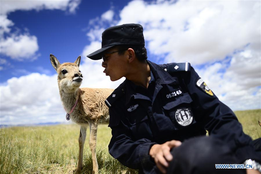Auxiliary police officer Xie Ancheng plays with a Tibetan antelope at a conservation station in Hoh Xil in Yushu Tibetan Autonomous Prefecture, northwest China's Qinghai Province, Aug. 15, 2017. China's annual political sessions of the National People's Congress (NPC) and the National Committee of the Chinese People's Political Consultative Conference (CPPCC) are scheduled to convene in March, 2018. During the two sessions, development agendas will be reviewed and discussed, and key policies will be adopted. Year 2018 marks the first year of fully implementing the spirit of the 19th National Congress of the Communist Party of China, which vowed to pursue the vision of innovative, coordinated, green, and open development that is for everyone. The CPC congress stressed that building an ecological civilization is vital to sustain the Chinese nation's development, &quot;we must realize that lucid waters and lush mountains are invaluable assets.&quot; (Xinhua/Zhang Hongxiang)<br/>