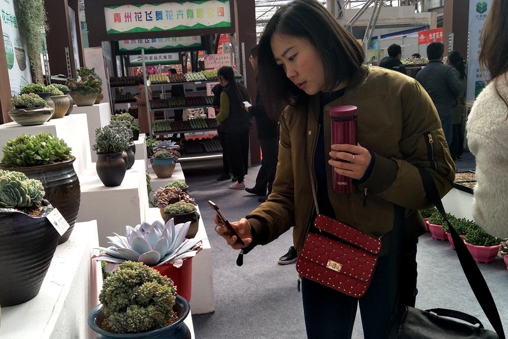 首届中国多浆(多肉)植物展在青州开幕 展期三天